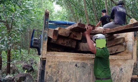 Lâm tặc vào rừng khai thác gỗ trong lúc giãn cách xã hội