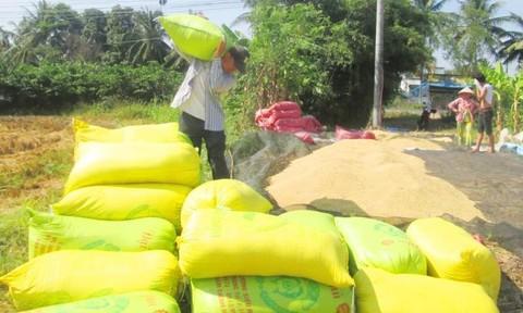 Đồng bằng sông Cửu Long: Cứu lúa…